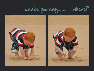 Ollie looking for crabs